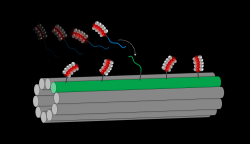 Schematic of the linking strand attached to a DNA-stabilized silver cluster hybridizing onto the complementary docking strand of a DNA nanotube.