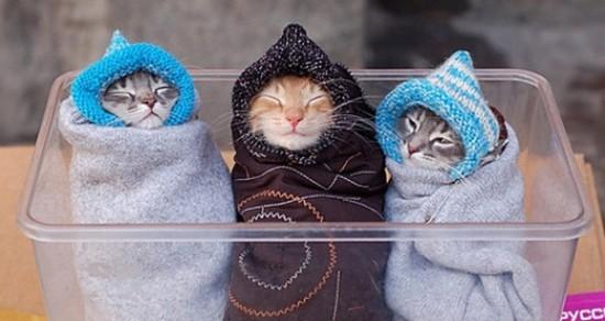 via tonsofcats.com